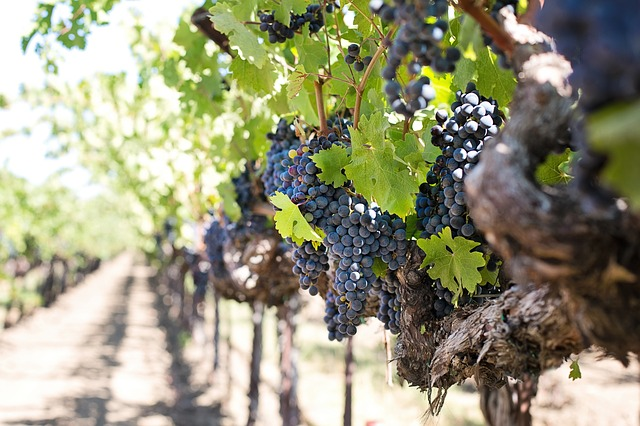 Boutique Washington Wineries, State Clash Over Water Pollution Plan